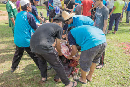 Photo for Muadzam Shah, Malaysia - SEPTEMBER 1st , 2017: Malaysian Muslim worked together skinning beef before distribute to the poor and community during Eid Al Adha ,the Feast of Sacrifice or Qurban - Royalty Free Image