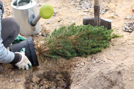 Foto de gardener takes out a tree sapling from the pot for planting. spring gardening - Imagen libre de derechos