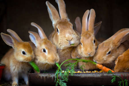 Foto de Rabbit and small rabbits eat carrots - Imagen libre de derechos