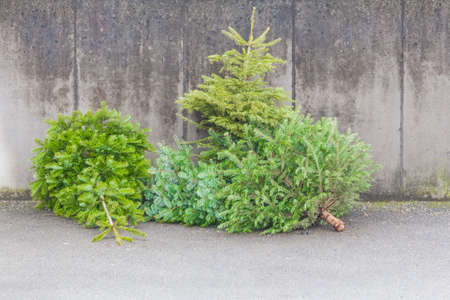 Photo pour Traditional green christmas trees firs on street at xmas season. The x-mas trees waiting for buyers on sale before christmas holiday or after ending x-mas time for disposal recycling reasons. - image libre de droit