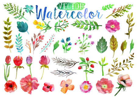 Illustration pour Vector watercolor aquarelle flowers and leaves. - image libre de droit