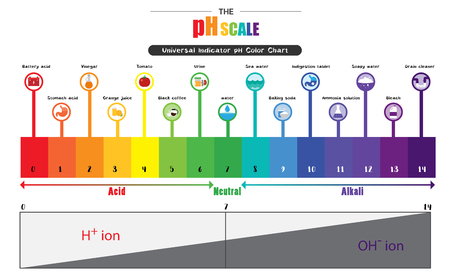 Illustration for The pH scale Universal Indicator pH Color Chart diagram acidic alkaline values common substances vector illustration flat icon design Colorful - Royalty Free Image