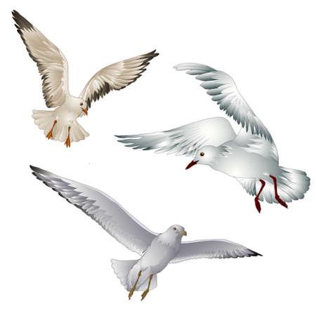 Illustration pour Vector illustration of birds gull on white background - image libre de droit