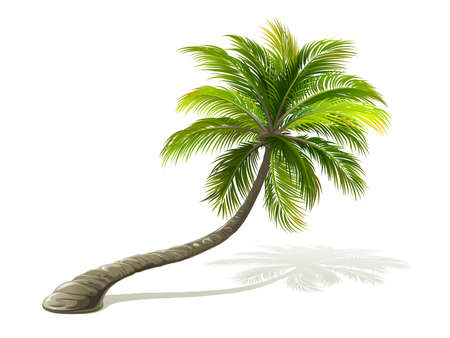 Illustrazione per Palm tree with shadow isolated on white. Vector illustration - Immagini Royalty Free