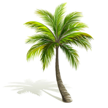 Ilustración de Palm tree with shadow isolated on white. Vector illustration - Imagen libre de derechos