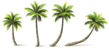 Ilustración de Palm trees with shadow isolated on white. Vector illustration - Imagen libre de derechos
