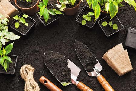 Photo pour Gardening tools and plants on land - image libre de droit