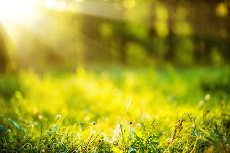 Photo for Natural background with green grass and sunshine effect bokeh - Royalty Free Image