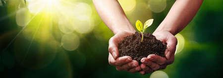 Foto de Plant in Hands. Ecology Concept - Imagen libre de derechos