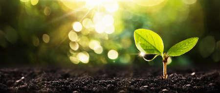 Foto de Young Plant in Sunlight - Imagen libre de derechos