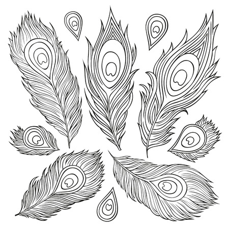 Vintage abstract decorative ethnic vector Feathers. Hand-drawn illustration.