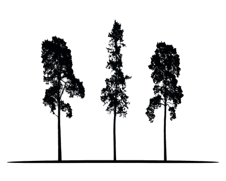 Illustration for Set of vector silhouettes of high coniferous trees isolated on white background - Royalty Free Image