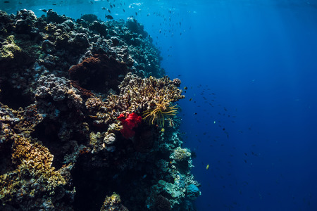 Photo for Underwater view with rocks and corals in blue ocean. Menjangan island, Bali - Royalty Free Image