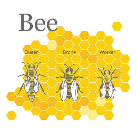 Illustration for Scientific image of bees on the honeycombs - Royalty Free Image