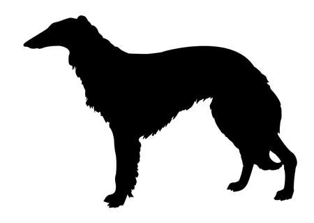 silhouette collie on white background