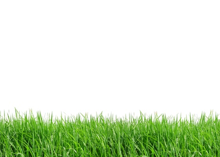 grass frame isolated on white background