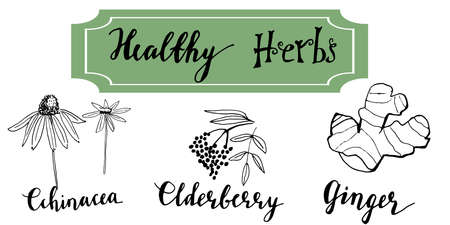 Foto für Herbs and medicinal plants collection. Vector hand drawn isolated objects on white - Lizenzfreies Bild