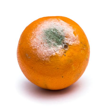 Photo pour Rotten orange fruit on white background - image libre de droit