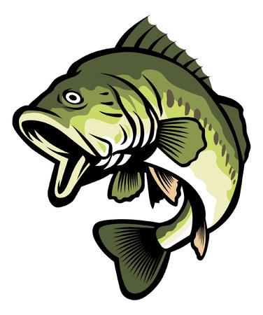 Ilustración de Freshwater largemouth bass fish illustration. - Imagen libre de derechos