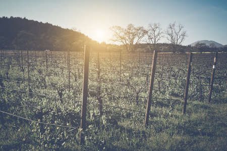 Vineyard in Winter with Vintage Film Style Filter