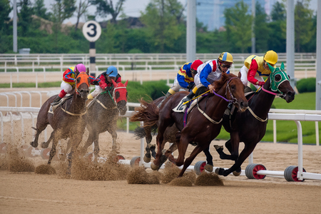 Photo for Horse race - Royalty Free Image