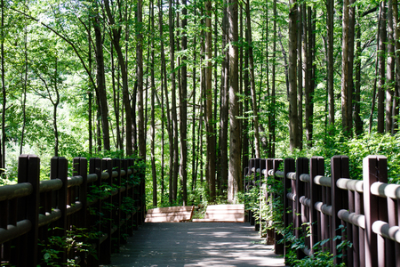 Foto de A walkway through the shaded forest - Imagen libre de derechos
