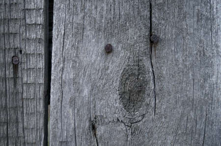 Photo for Old wood with rusty nails background texture - Royalty Free Image