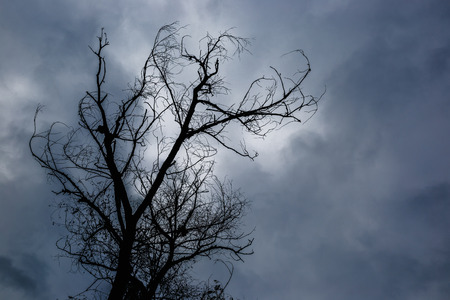 Photo pour Silhouette of dead tree without leaves with the dark sky on background - image libre de droit
