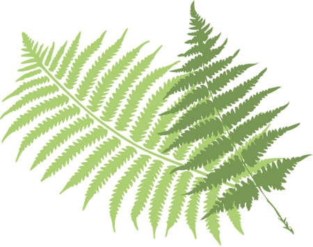 fern leaves mural