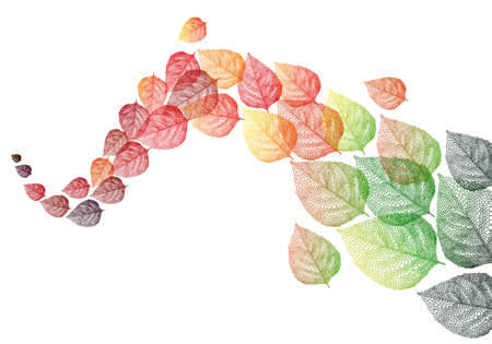 colorful autumn leaves flying in the wind, vector background illustration