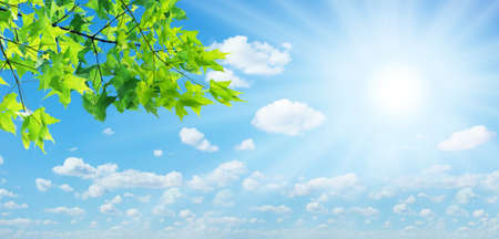 Photo pour Green leaves and the sun on the sky background  - image libre de droit