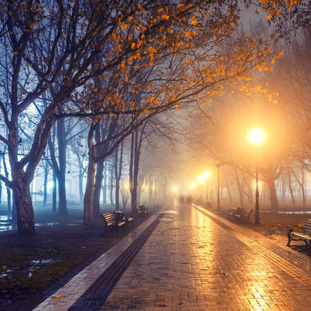 Photo for people in autumn city park at night - Royalty Free Image