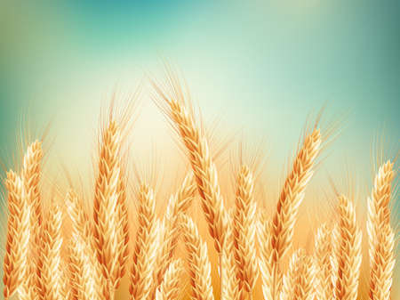 Illustration pour Gold wheat field and blue sky. EPS 10 vector file included - image libre de droit