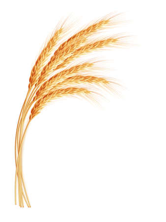 Illustration for Wheat ears with space for text. EPS 10 vector file included - Royalty Free Image
