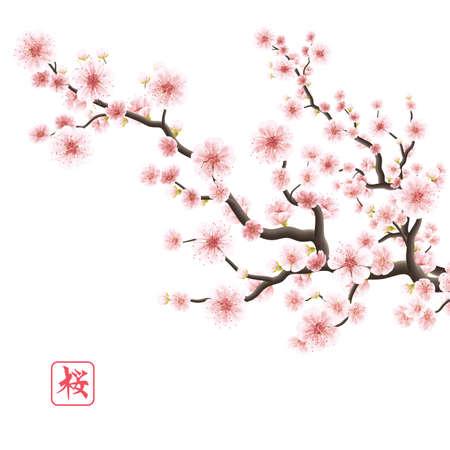 Illustration pour Realistic sakura japan cherry branch with blooming flowers. - image libre de droit