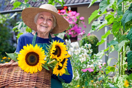 Photo pour Happy Senior Woman with Brown Hat Carrying Baskets of Fresh Sunflowers at the Garden, Smiling at the Camera - image libre de droit