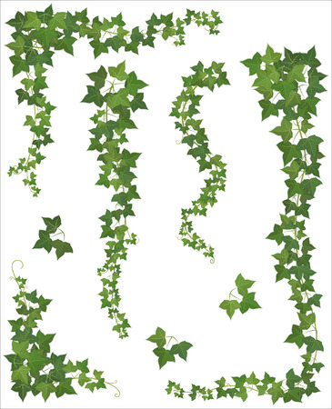 Illustration pour Set of Hanging branches of ivy on a white background (EPS 10 shadow) - image libre de droit