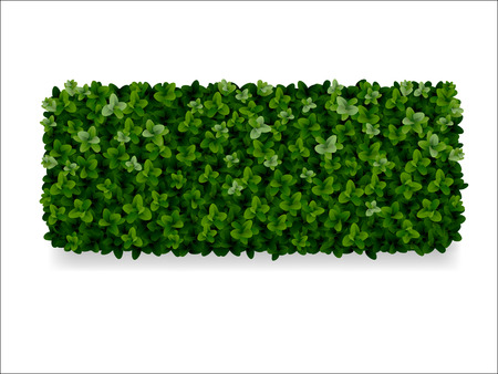 Illustration pour rectangular boxwood shrubs, green fence - image libre de droit