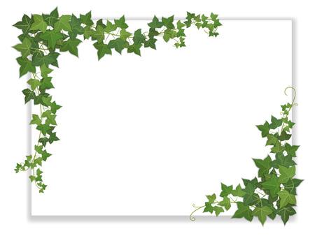 Illustration pour white paper sheet decorated hanging ivy - image libre de droit