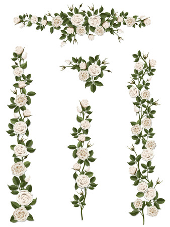 Ilustración de Branches climbing white rose flower with leaves and buds. Elements can be used as a Art Brush (scale proportionately) to create of any curled form. To decorate the balcony facades, fence, wall, card. - Imagen libre de derechos