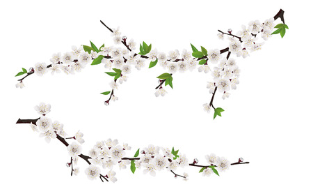 Illustration pour Set of spring blooming tree branches, tree branch with white flowers and leaves. - image libre de droit