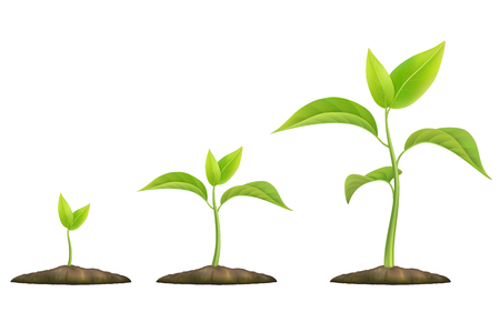 Illustration pour Stages of plant growth. Green sprout grows from the ground. Realistic vector illustration. It symbolizes life and development and ecology. - image libre de droit