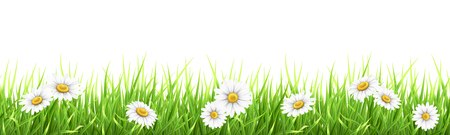Illustration pour Grass and chamomile. High detailed vector illustration. - image libre de droit
