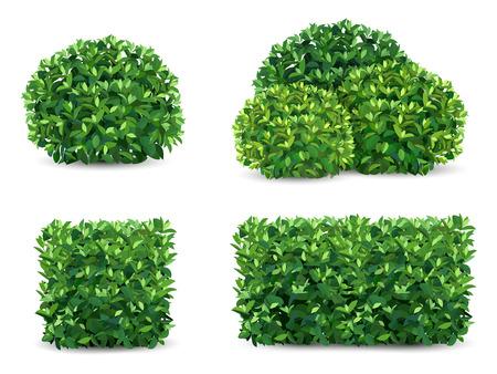 Ilustración de Vector bush in different forms. An ornamental plant shrub for the design of a park, a garden or a green fence. - Imagen libre de derechos