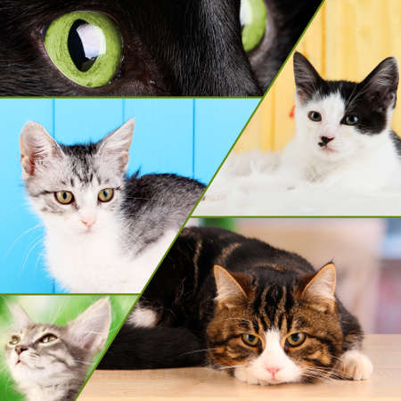 Collage from several cats