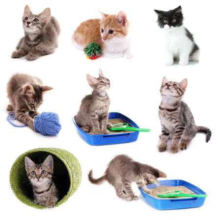 Collage of kittens and different stuff for them isolated on white