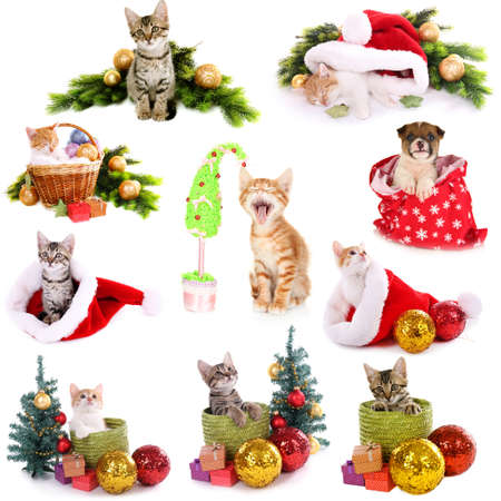 Collage of animals with Christmas decorations isolated on white