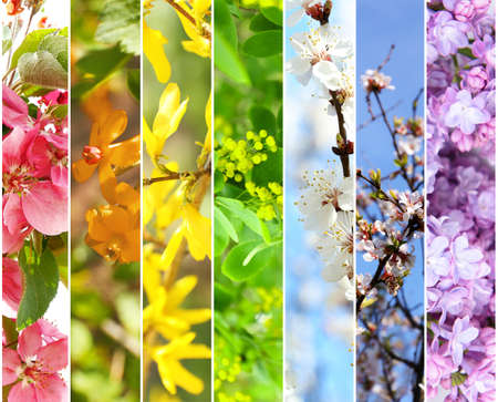Photo for Spring collage - Royalty Free Image