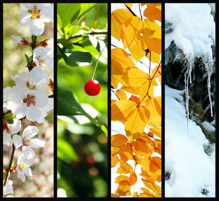 Photo for Four seasons collage: winter, spring, summer, autumn - Royalty Free Image