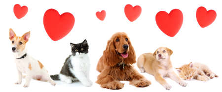 Foto de Cats and dogs with red hearts isolated on white - Imagen libre de derechos